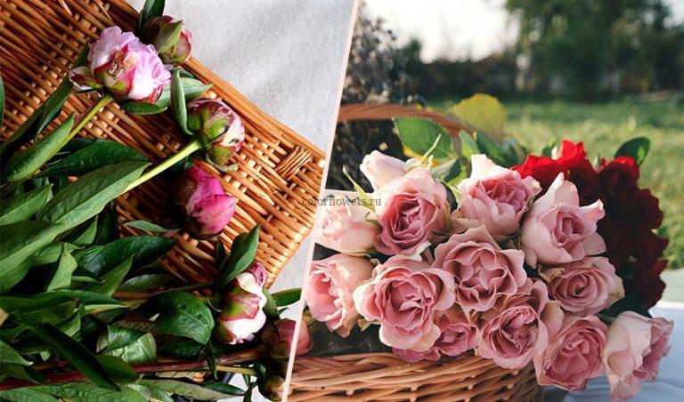 Букет или корзина цветов?