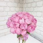 25 пионов розовых